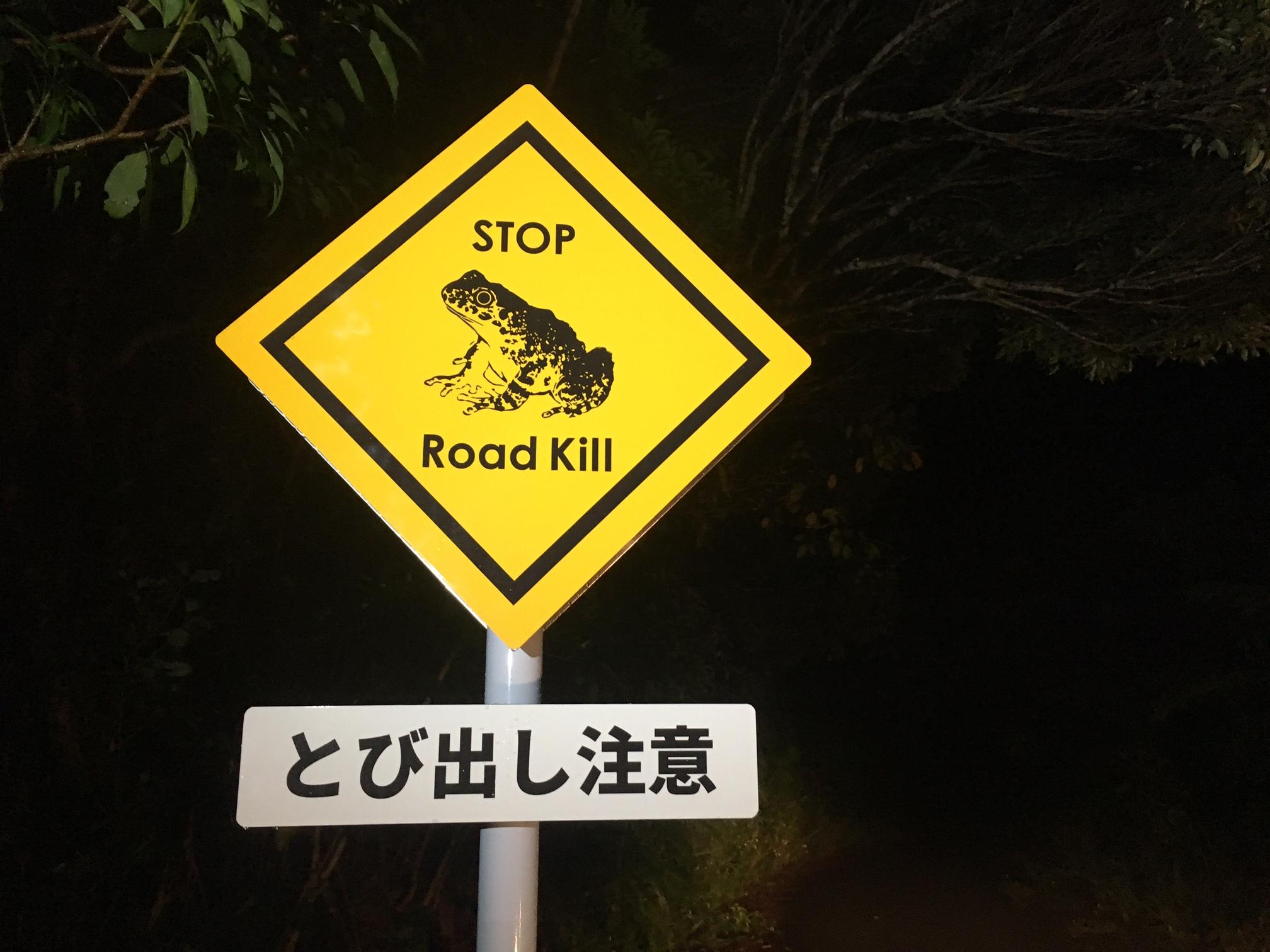 Ishikawas frog - Roadkill