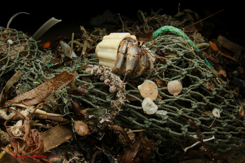 Hermit crab- Plastic pollution