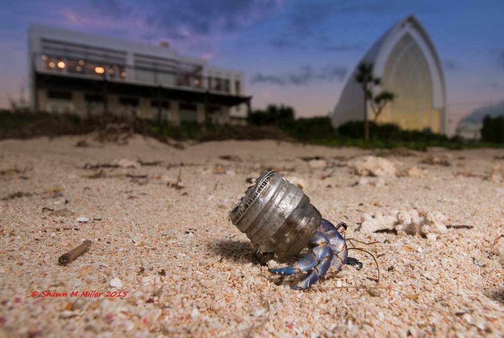 Hermit crab in a glass bottle