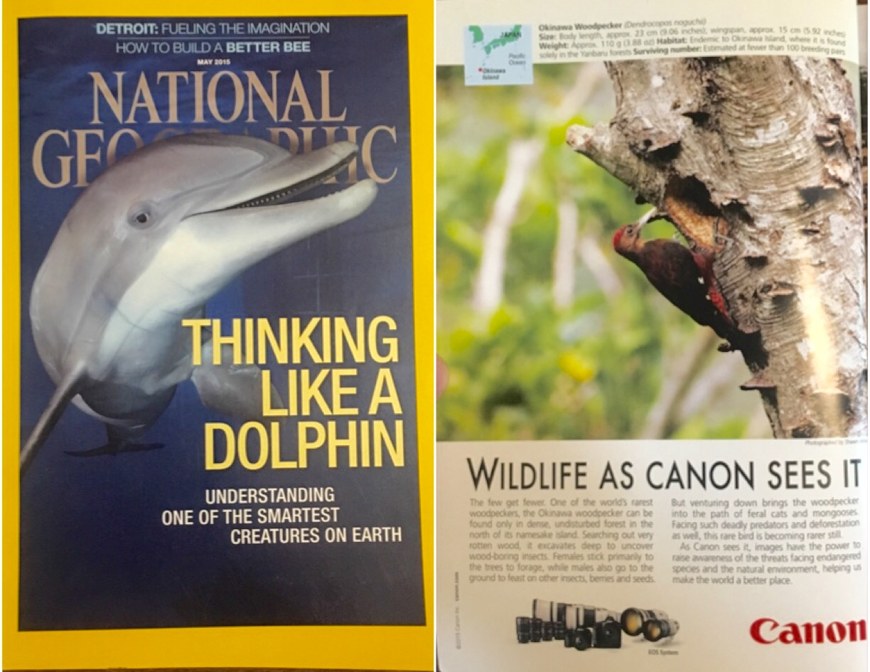 Woodpecker featured Nat Geo May 2015