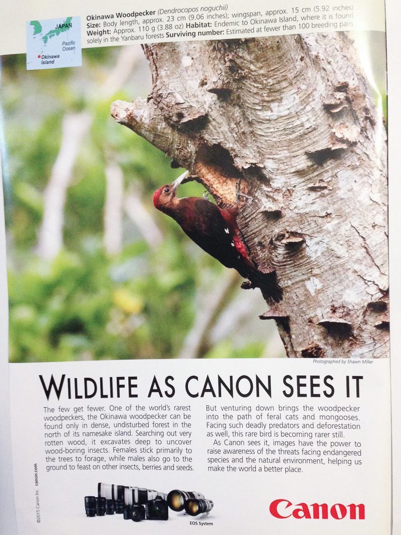 WILDLIFE AS CANON SEES IT -Published National Geographic May 2015
