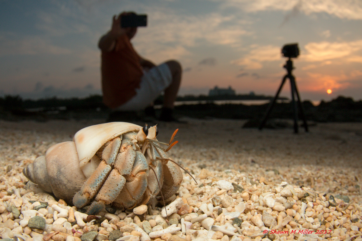 Hermit crabs of Okinawa