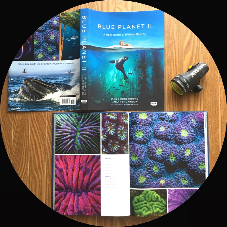 Underwater fluorescence - Shawn Miller featured Blue planet 11