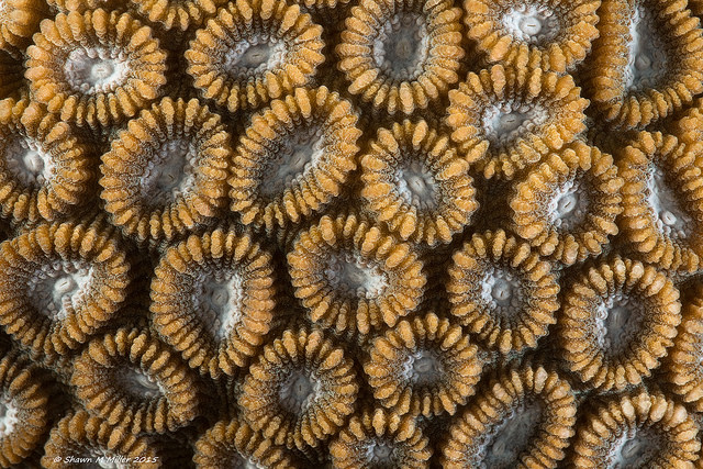 Coral abstract -Laowa 60mm macro F11
