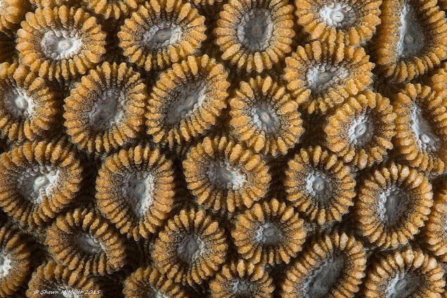 Coral abstract -Laowa 60mm macro F11
