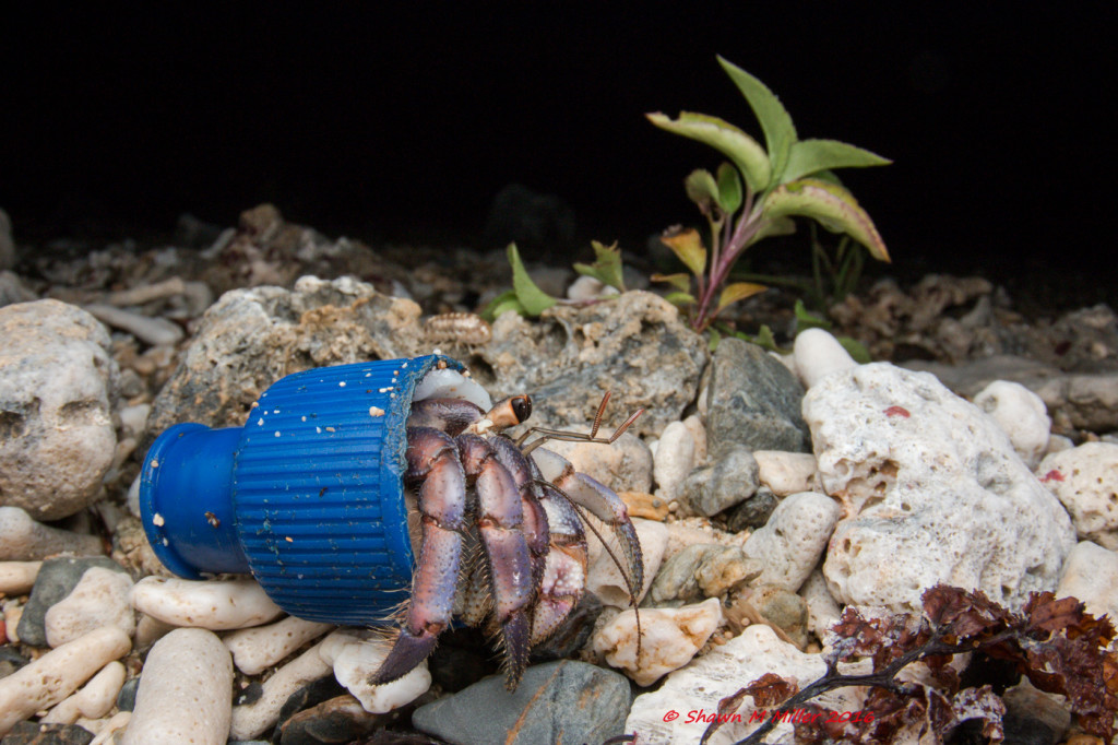 Hermit crab and plastic- Stella 2000 with fill flash