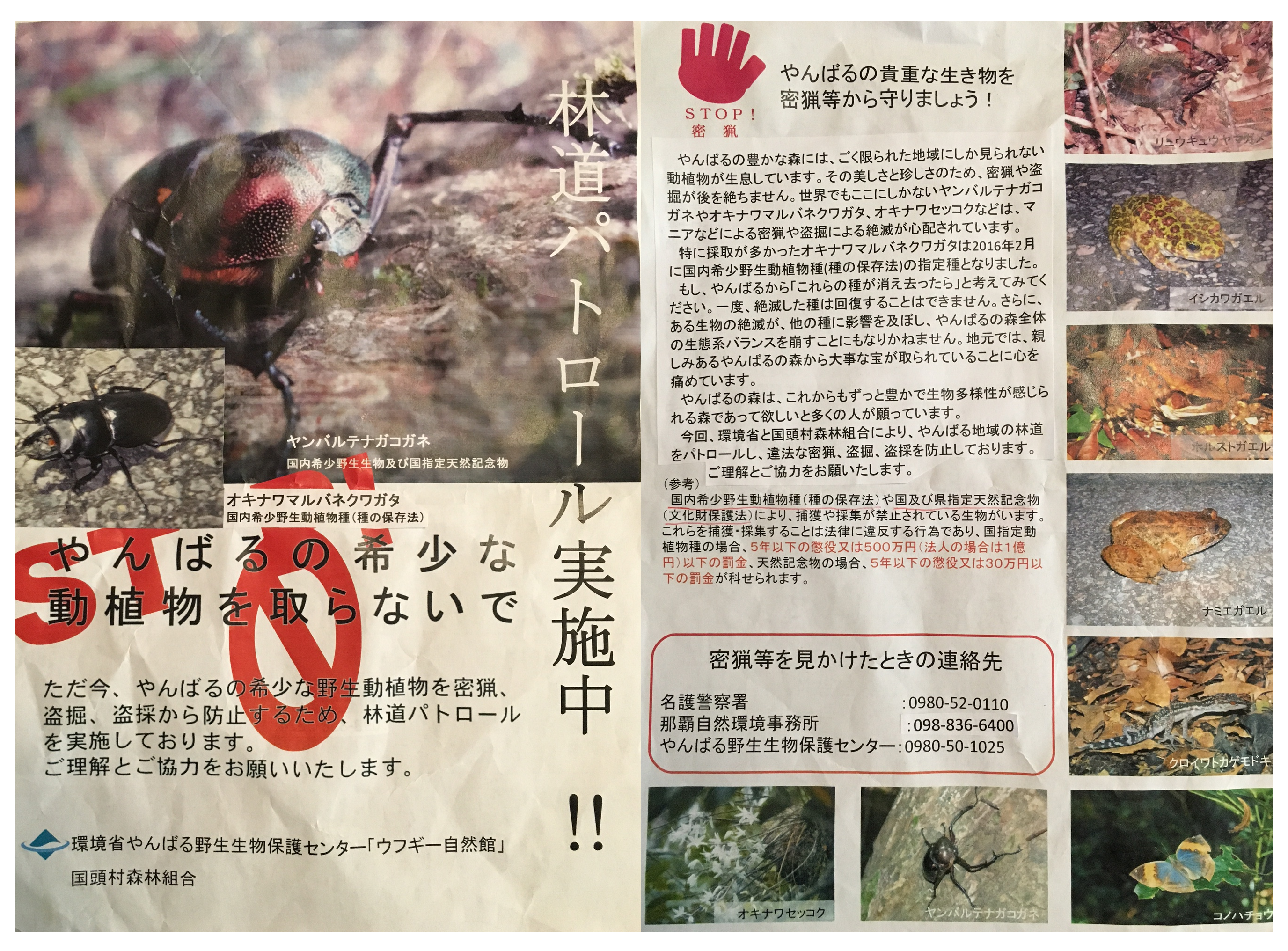 Poaching flyer - Yanbaru