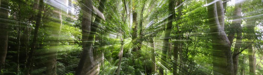 Yanbaru forest