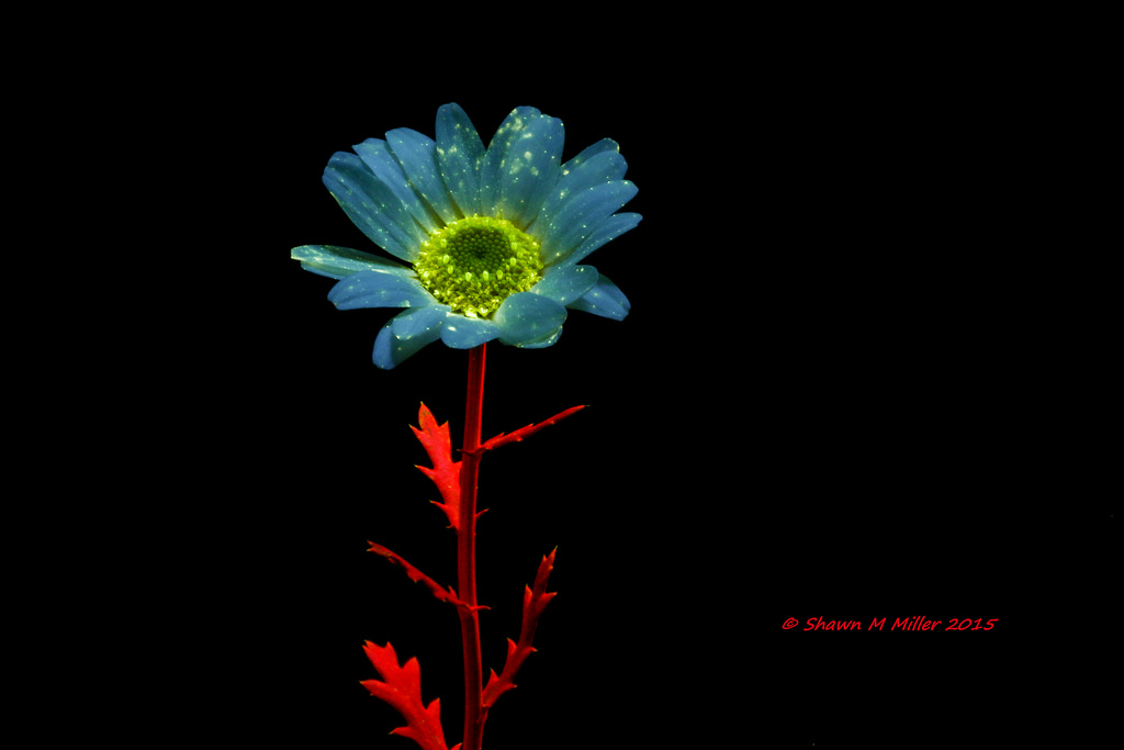 Flower under blue light