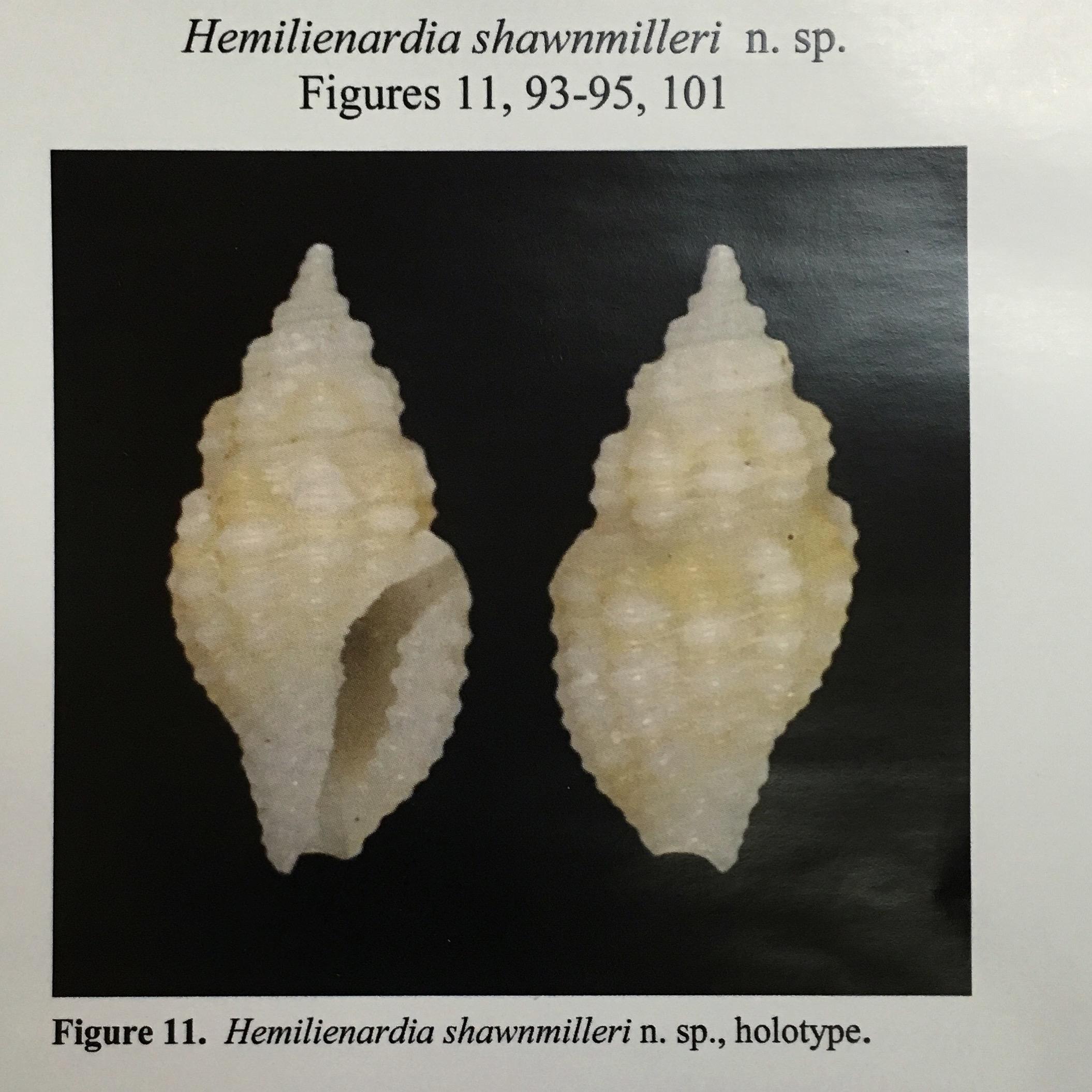 Hemilienardia shawnmilleri
