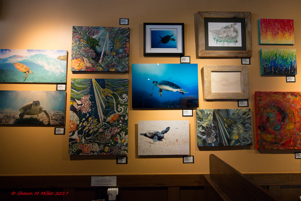 Turtle art show -Okinawa, Japan