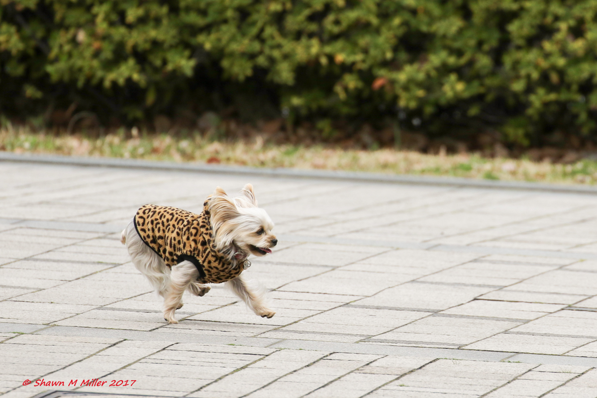 Cheetah like speed
