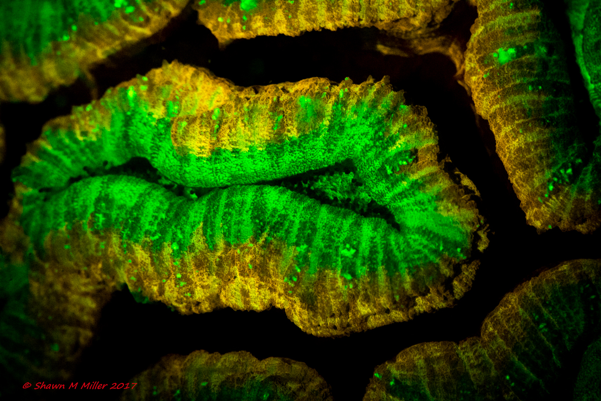 True underwater fluorescence © Shawn Miller