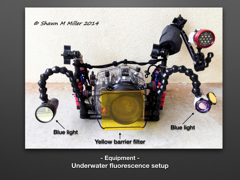 Shawn Miller fluorescence setup