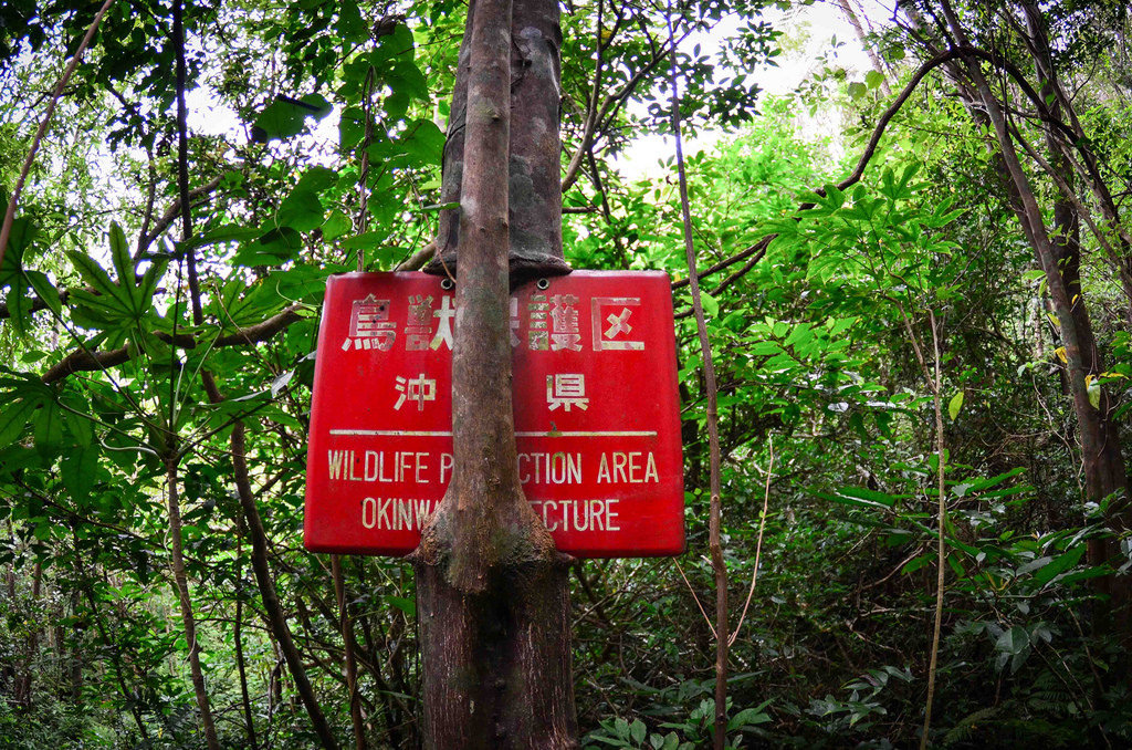 Wildlife protection area -Yanbaru forest