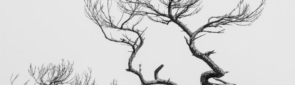 Trees of Okinawa